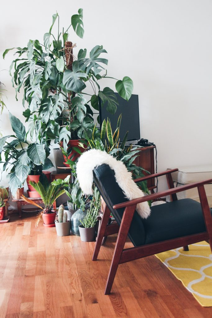bitki dekor
